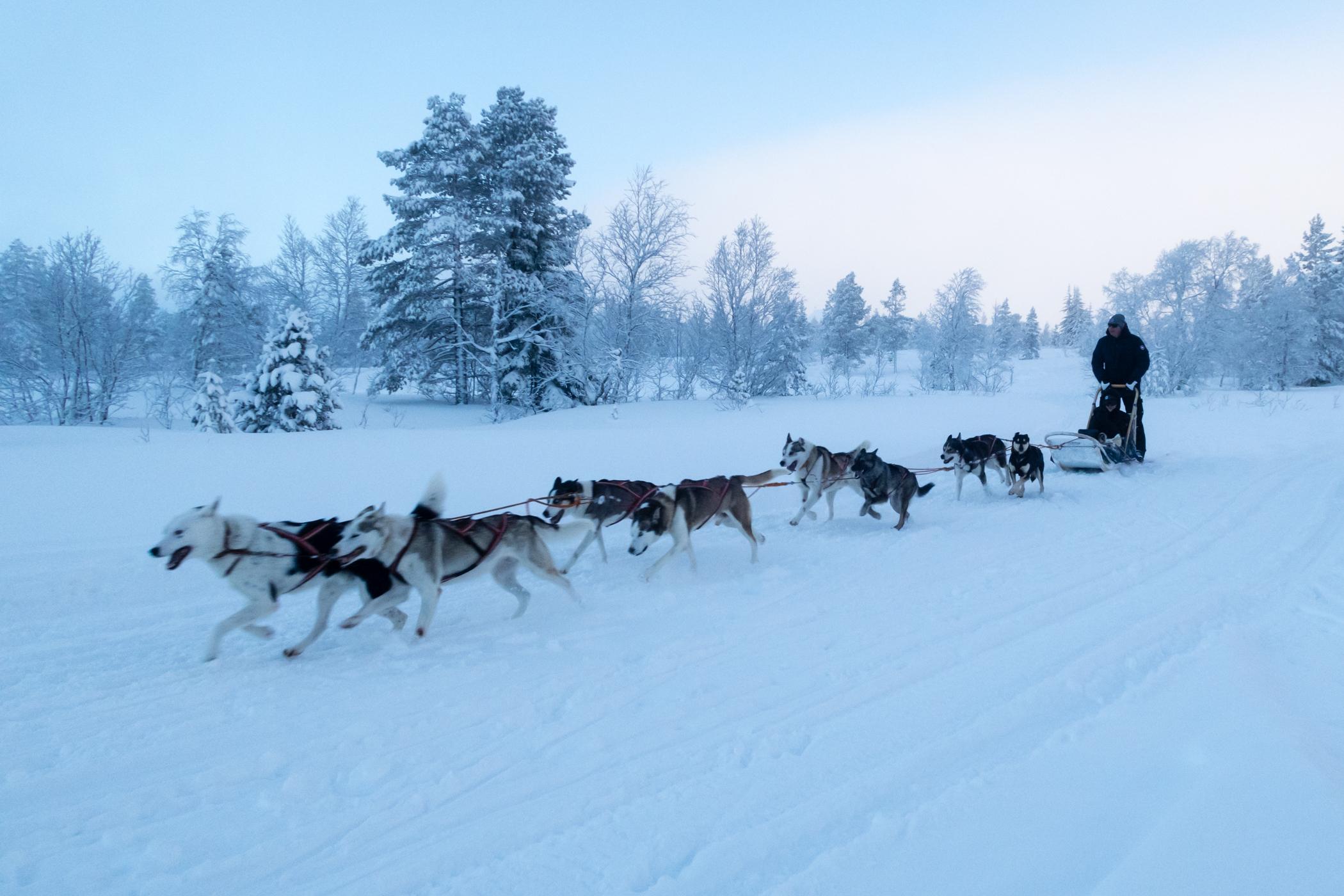 På www.fjallaventyr.com kan der bookes køretur på hundeslæde // Foto: Troels Kjems